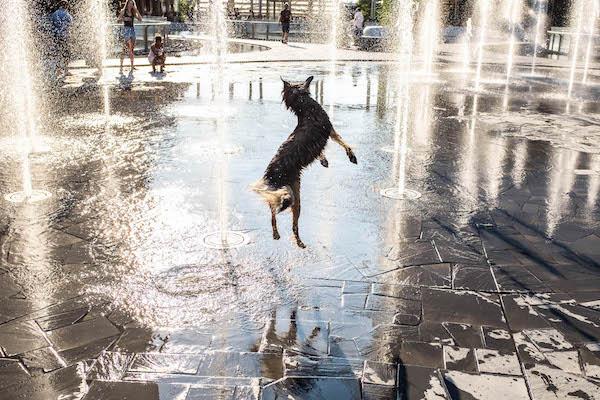 dogfountain.jpg