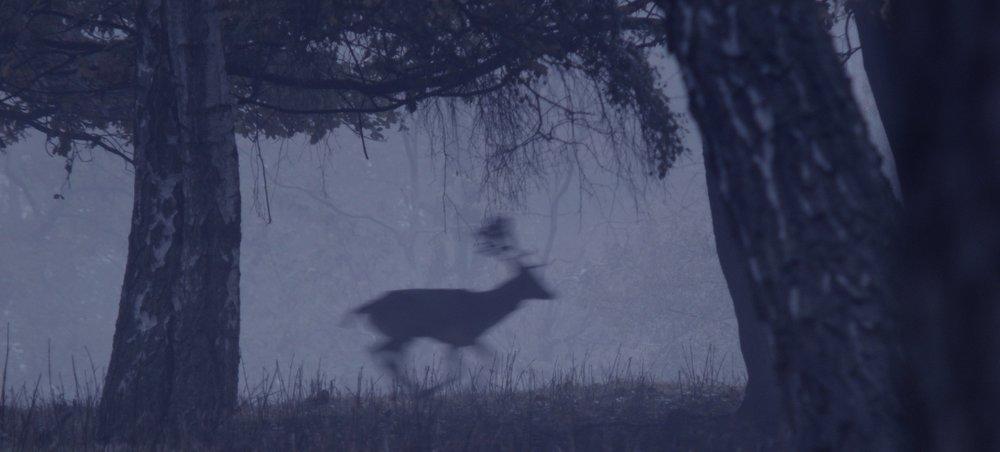 DeerBoy_Stills_03.jpg