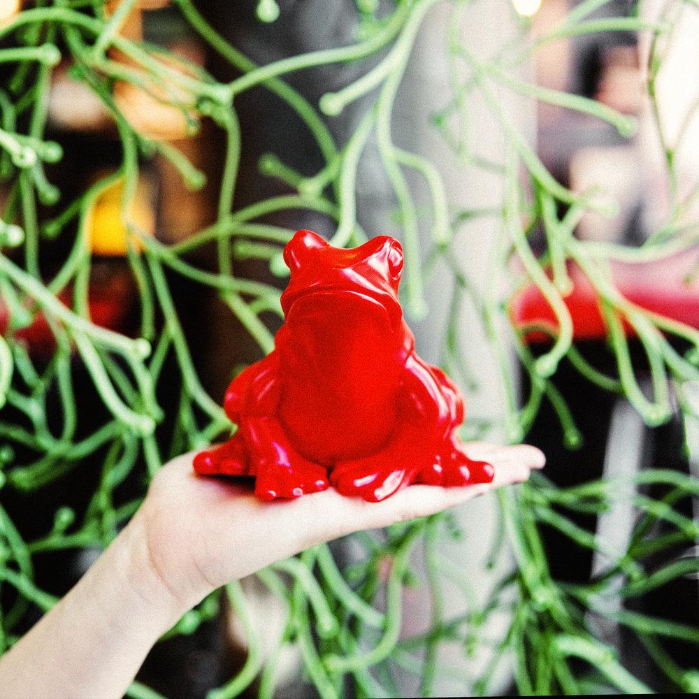 Frog Filter-2.jpg