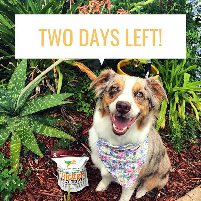 Your pup is a foodie! Make their food wishes come true by entering our #giveaway now! Check out our last post and our co-host @wishuponanaussie to enter!