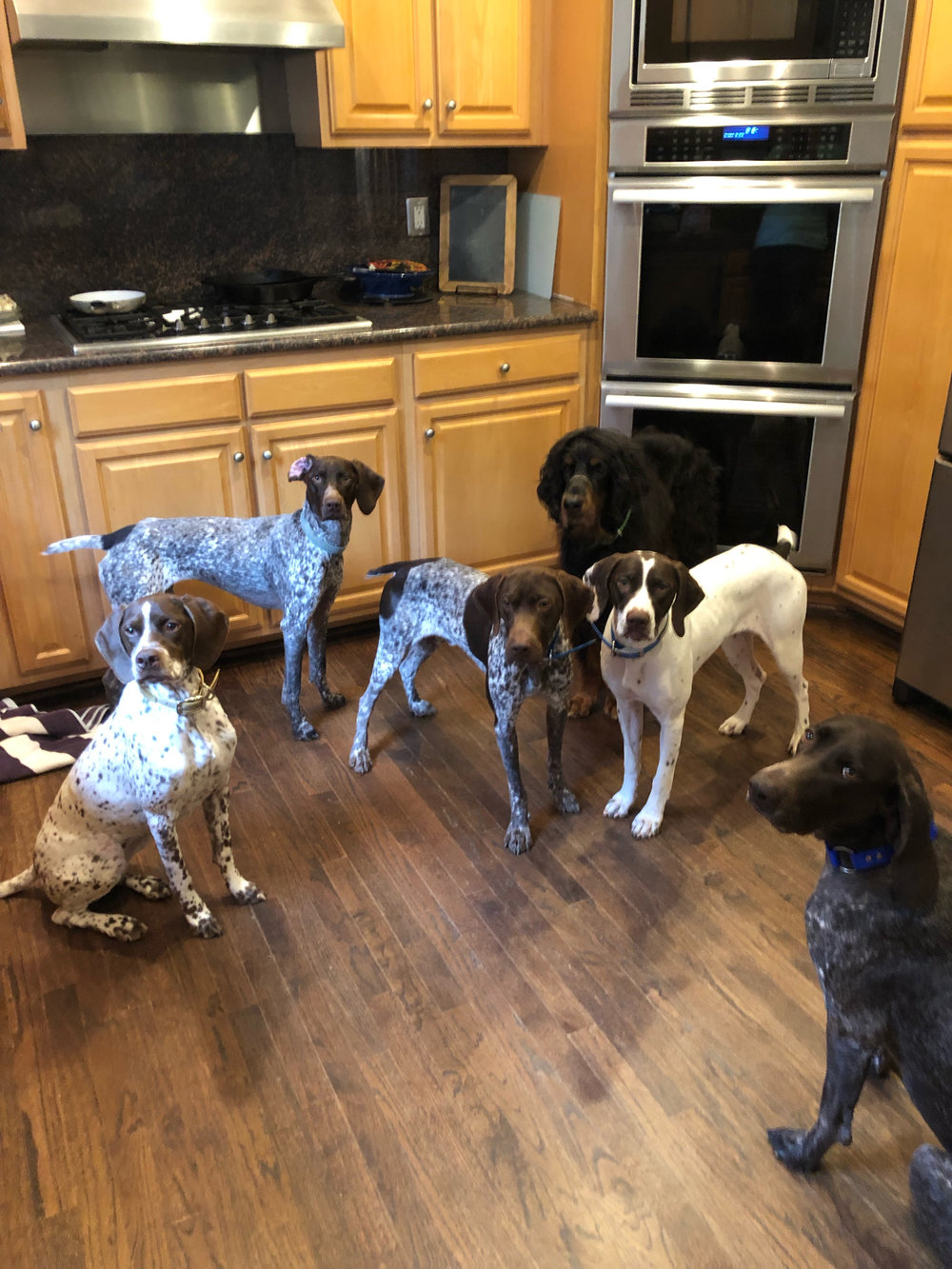 dogs kitchen.jpg