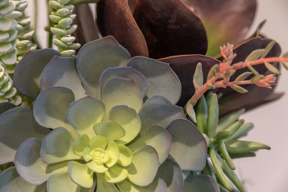 Sharon-Green-Menlo-Park_Model-A2_Kitchen-still-life-succulant_V1-20.jpg