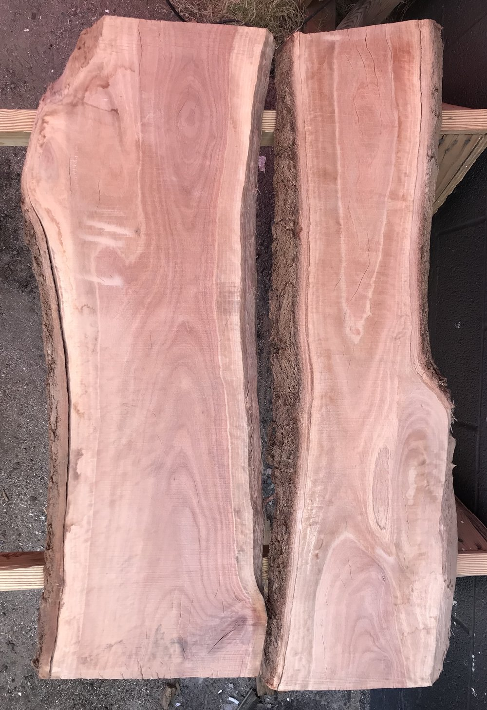 Mini eucalyptus slab with beautiful grain