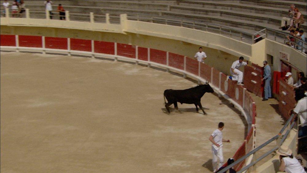 FFOTW_107_bull chase.jpg