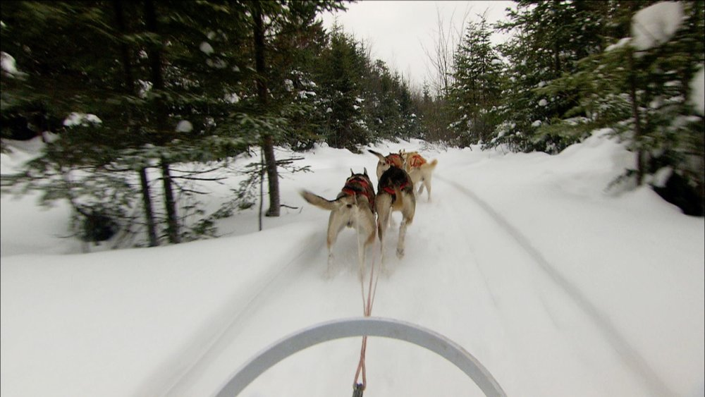 pov dog sled.jpg