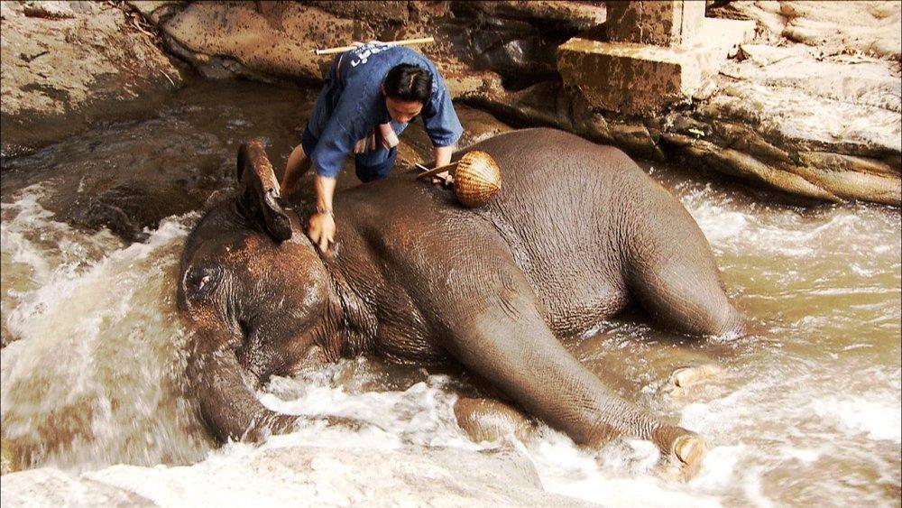 FFOTW_114_elephant bath.jpg