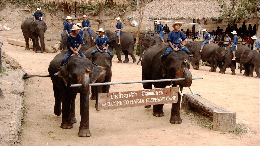 FFOTW_114_ws elephant camp.jpg