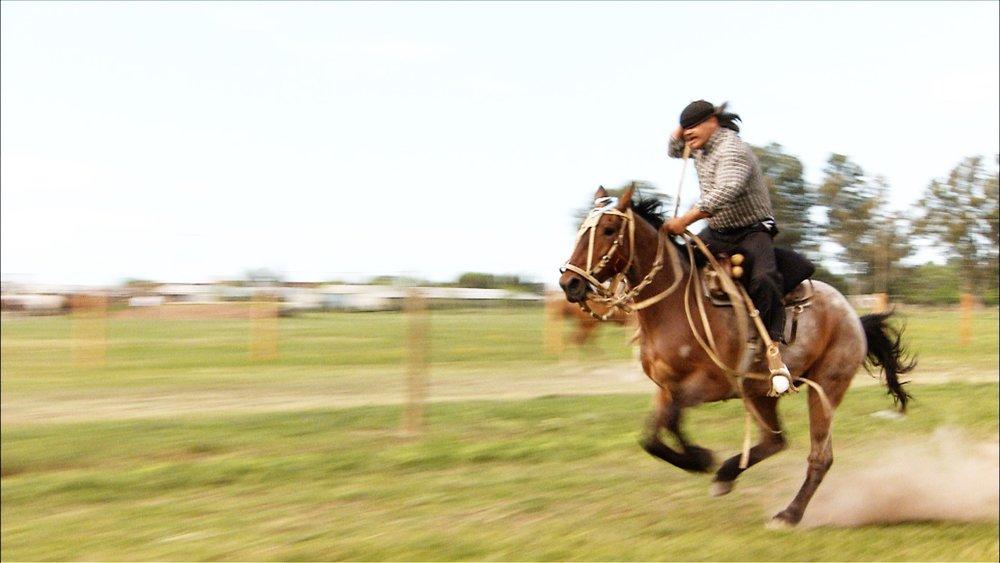 FFOTW_202_full gallop.jpg