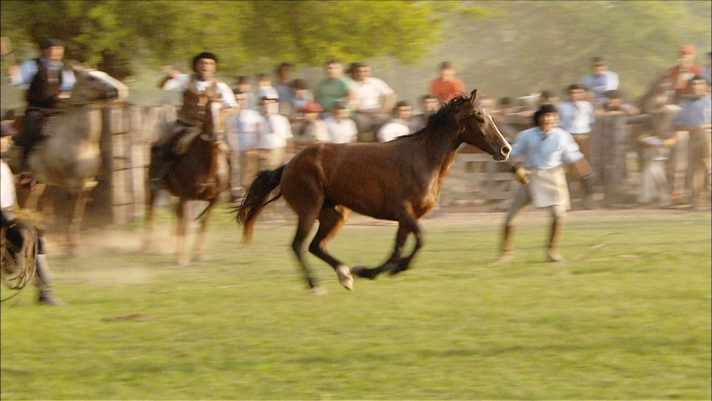 FFOTW_202_horse capture.jpg