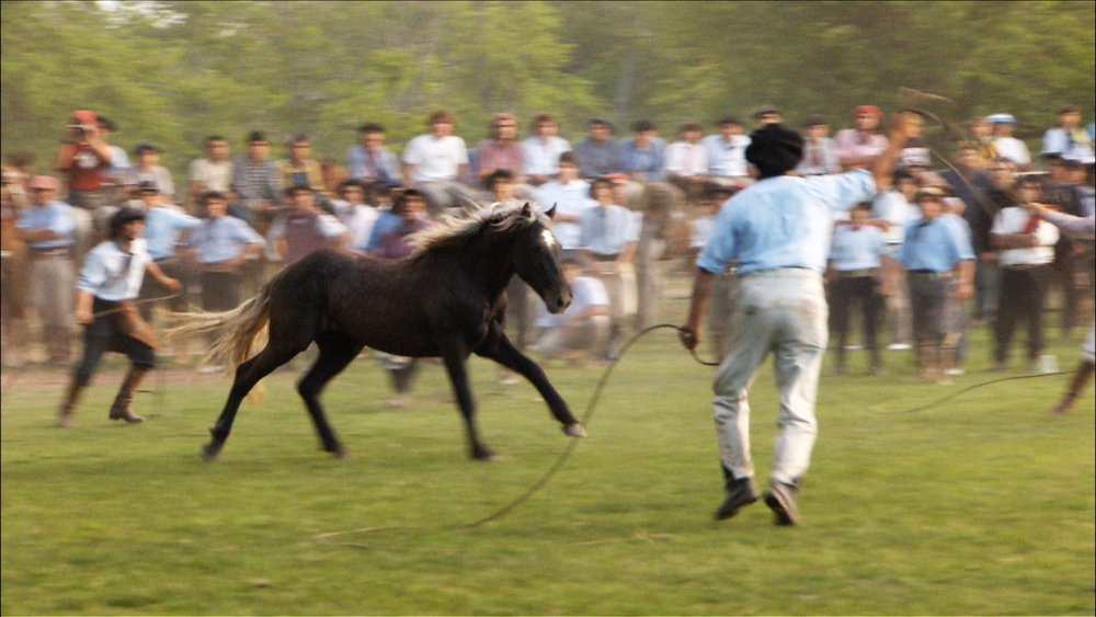 FFOTW_202_roping horse.jpg