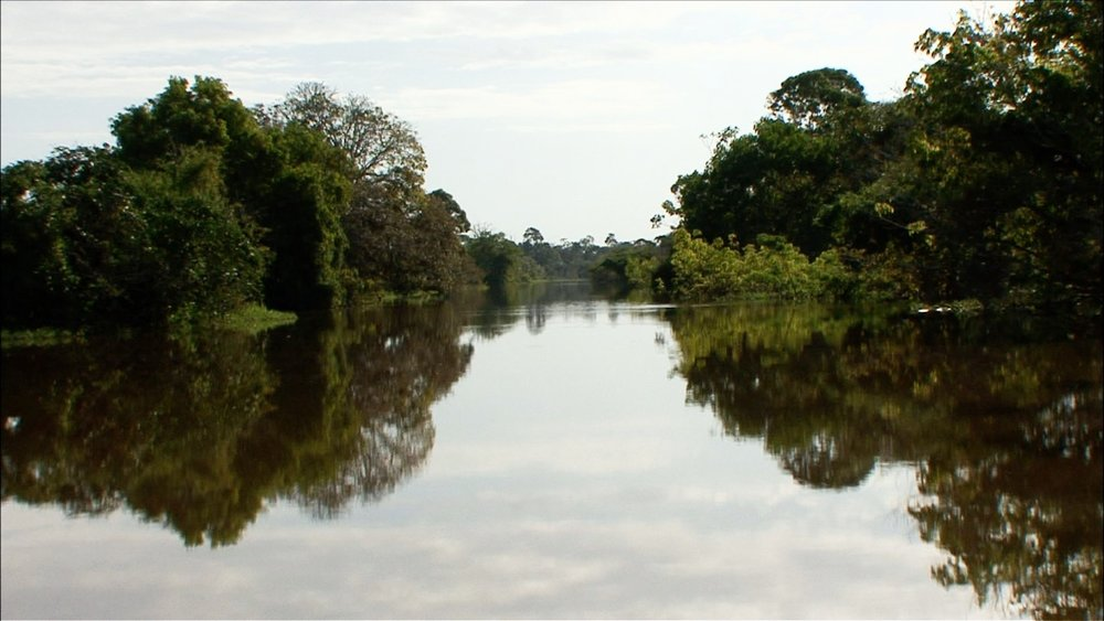 FFOTW_208_amazon jungle.jpg