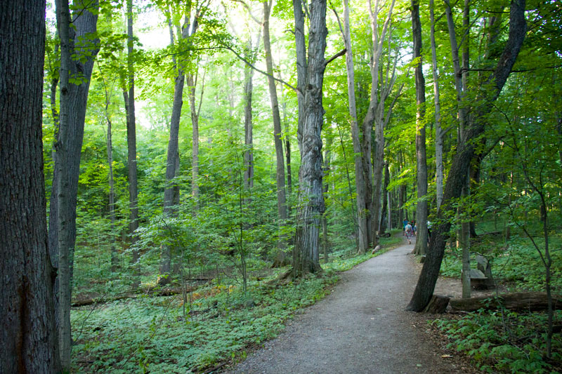 The Sacred Grove - Where Joseph Smith said to have had his first vision in which he claimed to have been visited by Jesus and the Father