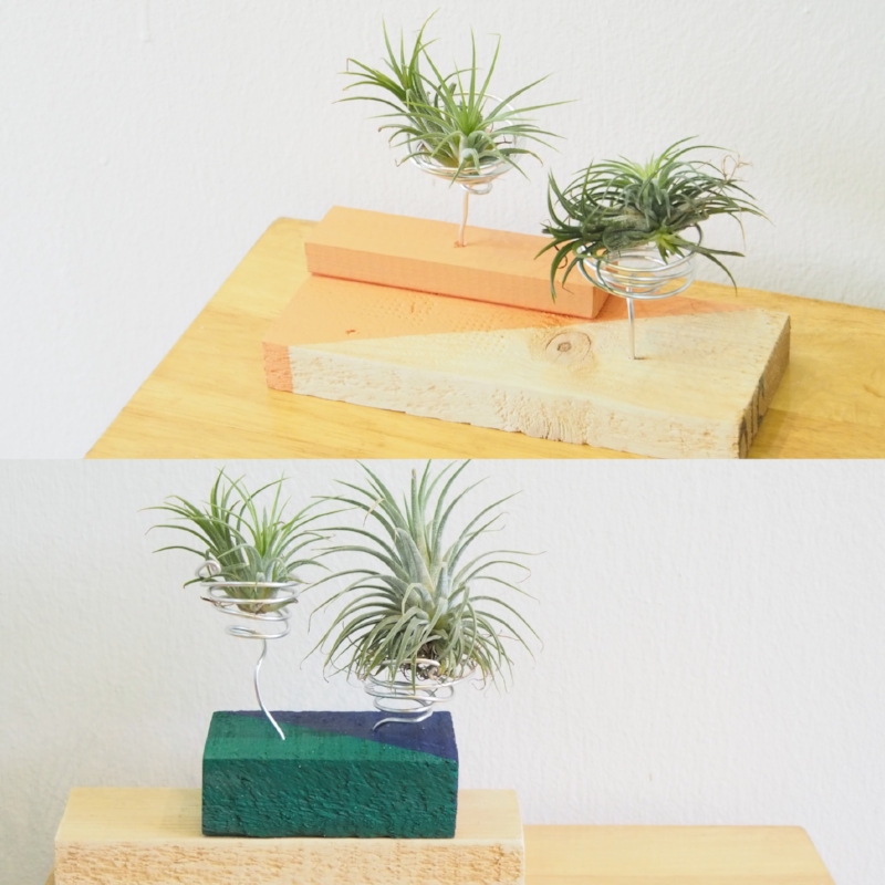 Air Plant Art – Upcycling for Green Fingers   Calling all green fingers! Create a plant installation worthy of display in the living room! Learn about upcycling and masking techniques as we use heat-treated pine wood blocks to create contemporary plant holders. This workshop is also a great introduction to caring for super easy-to-keep air plants. All students will bring home a plant installation that includes a pair of baby air plants (Tillandsia species). -  Recommended for ages 6 & up. Fees: $30 Duration: 1 hour