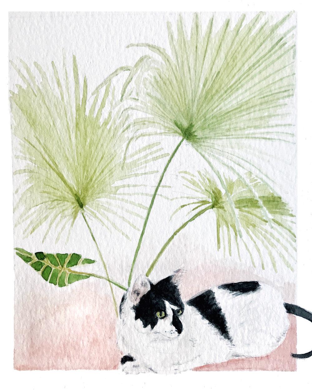 Mačka with Palms