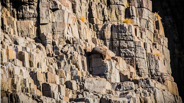 Who knew seals had such good camouflage 💁♀️ . . #brunyislandtas #showusyourbruny #seal #sealcamouflage #discovertasmania #tassiefauna #tasmaniantourism #landscape