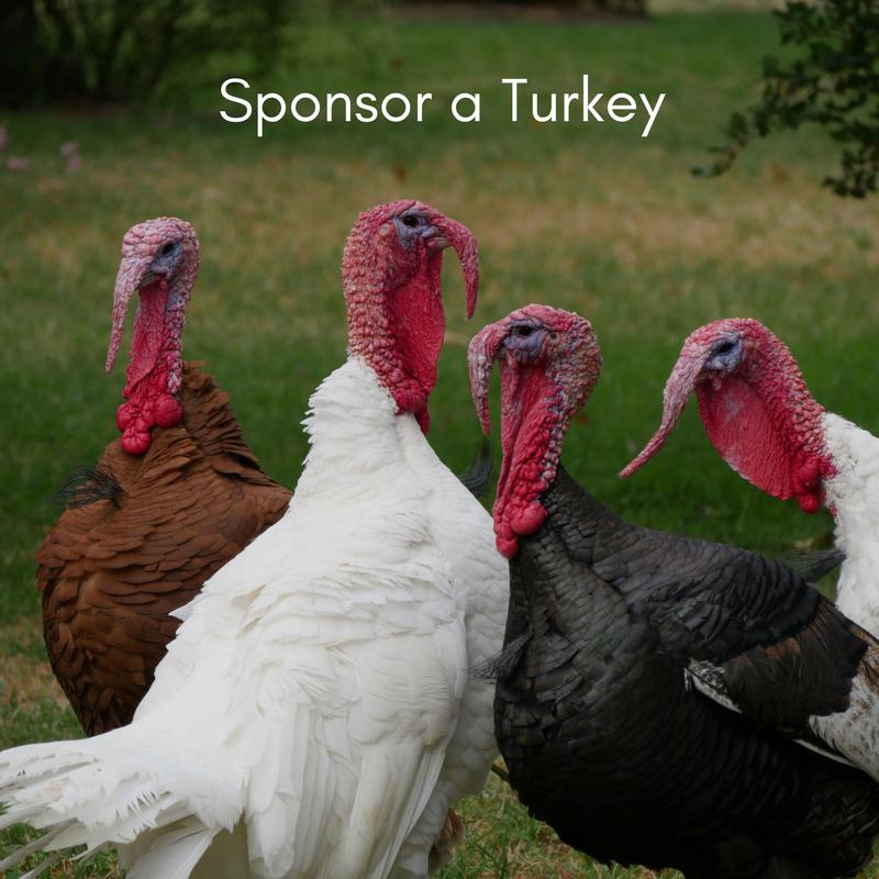 Sponsor a Turkey