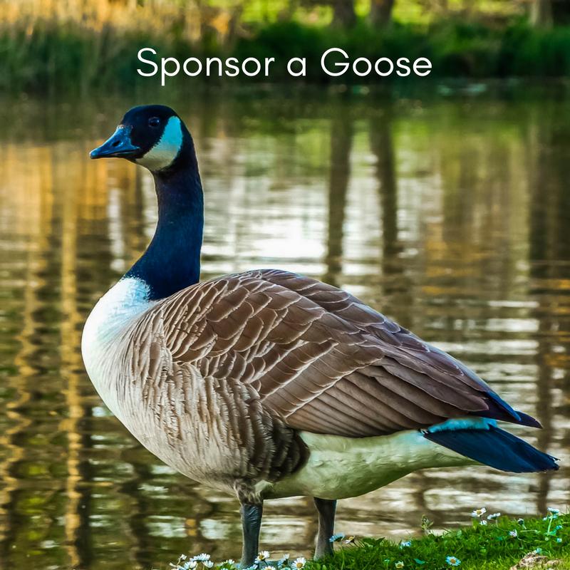 Sponsor a Goose