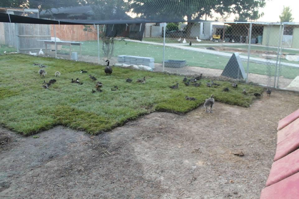 sod aviary.jpg
