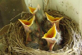 I found a baby bird -