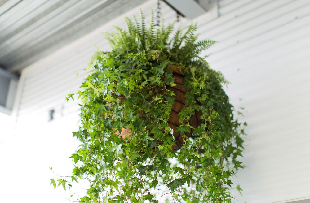 advantage plants - daytona speedway-46.jpg