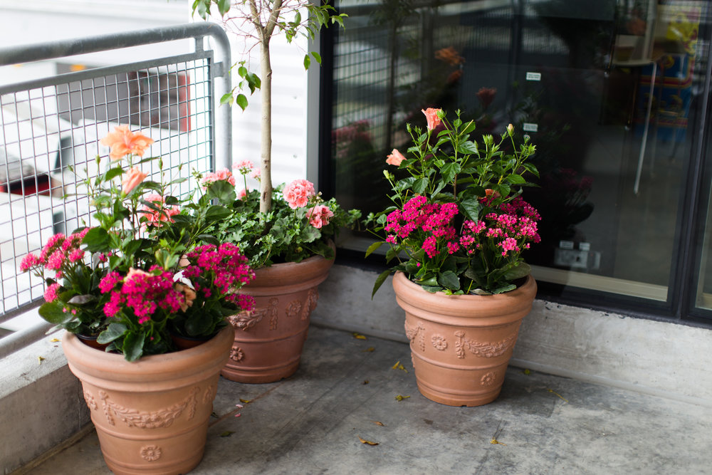 advantage plants - daytona speedway-37.jpg