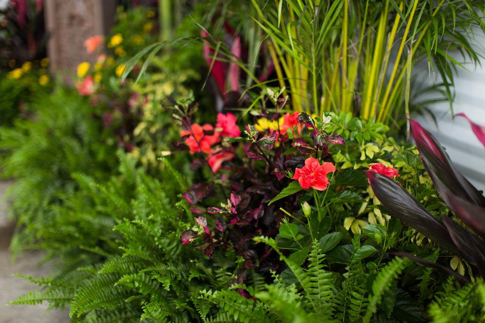 advantage plants - daytona speedway-48.jpg