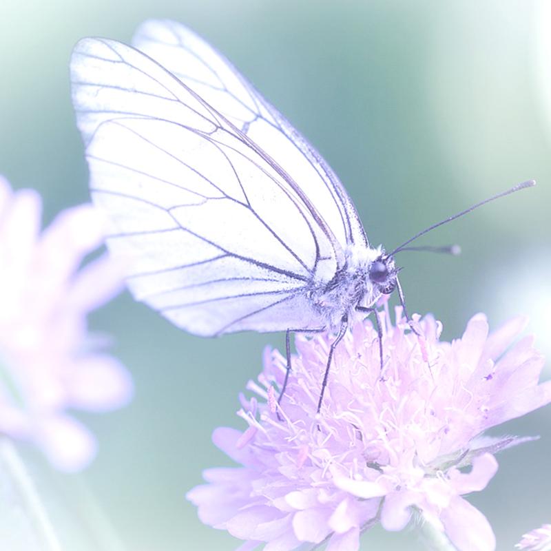 papillon24_01.jpg