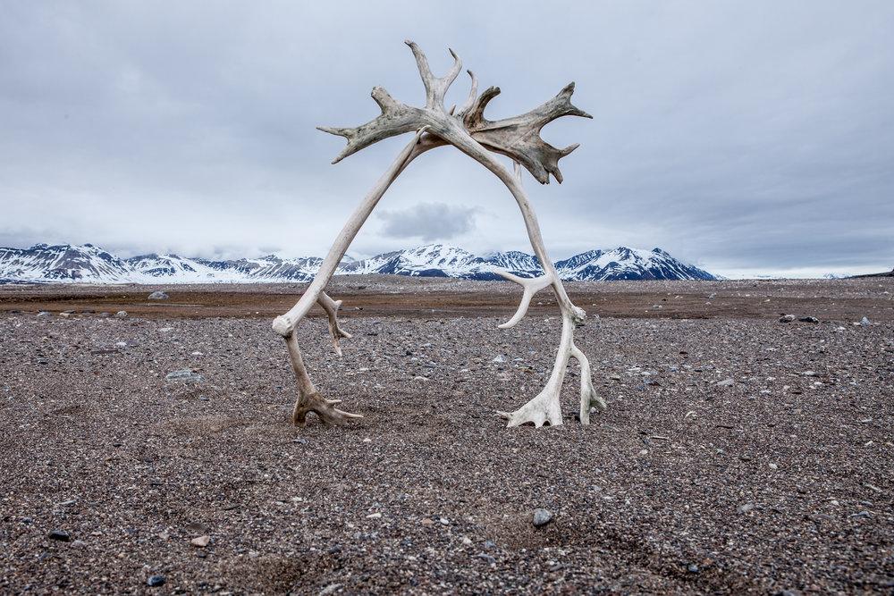 books Arctic-52.jpg