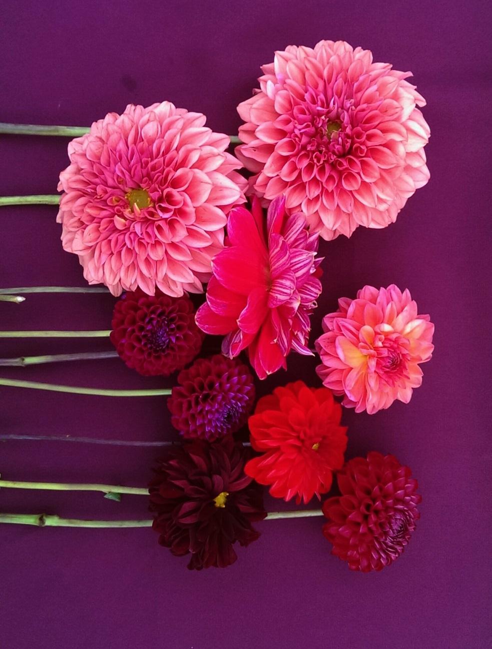 Autumn Flowers Flower Arranging Misa Floral