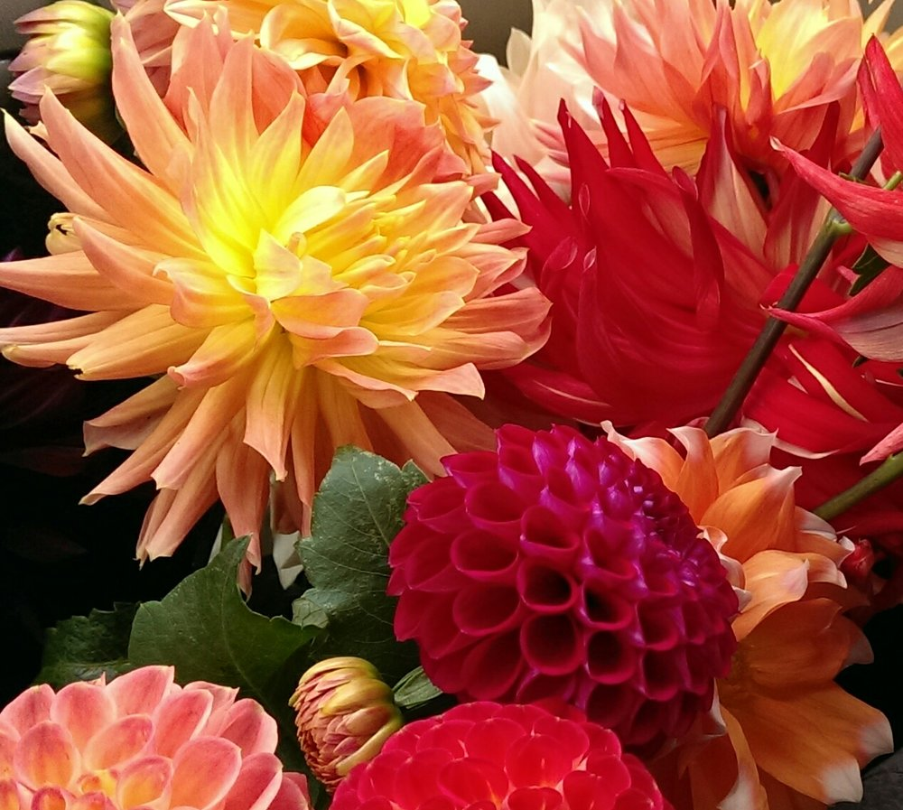 Above: Dahlias from   Lynnvale Studios   and   Don's Dahlias  . Below: Combine red, orange and coral dahlias and pops of white dahlias with darker purple and burgundy dahlias as well as cotinus foliage for a moody yet elegant composition.