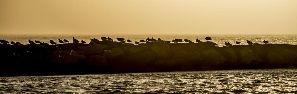 jettybirds