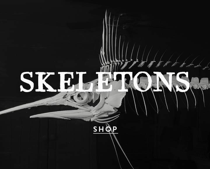 JB-skeletons.jpg