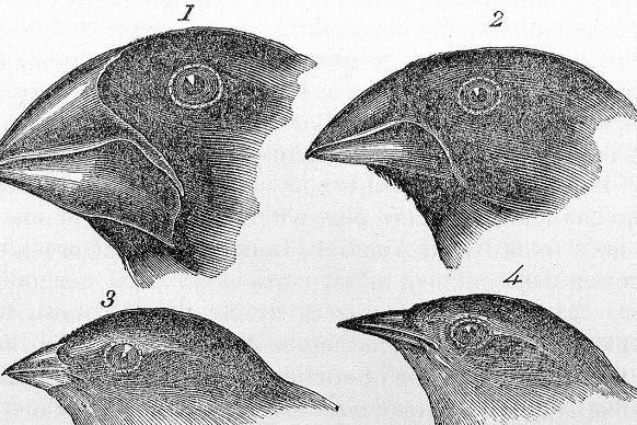 darwin-finches.jpg