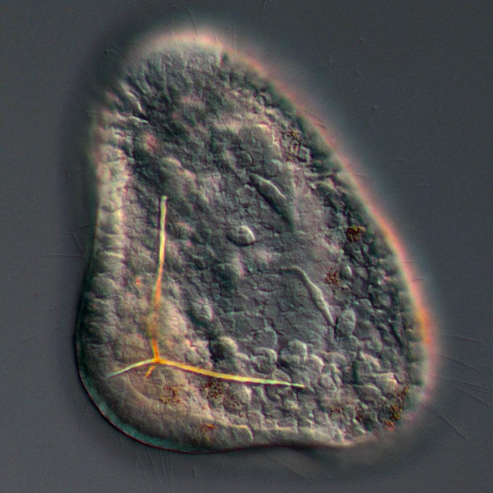 Cellular and Developmental Biology of Marine Organisms Lab -