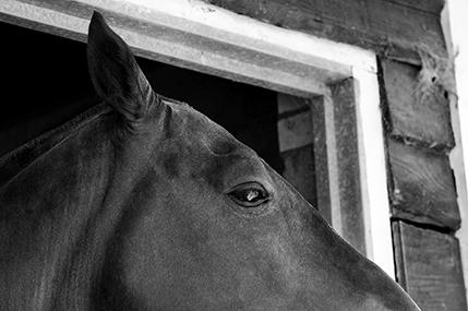 Polo horses_2.jpg