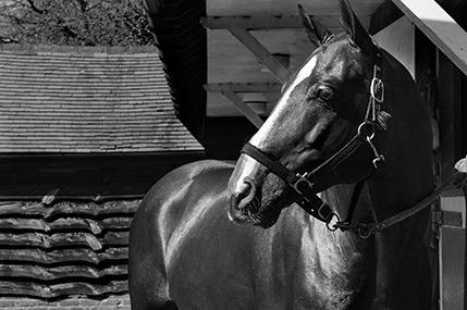 Polo horses_3.jpg