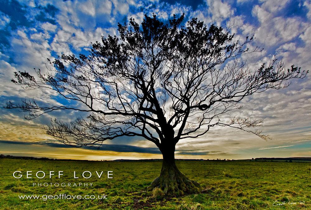Lone tree bright