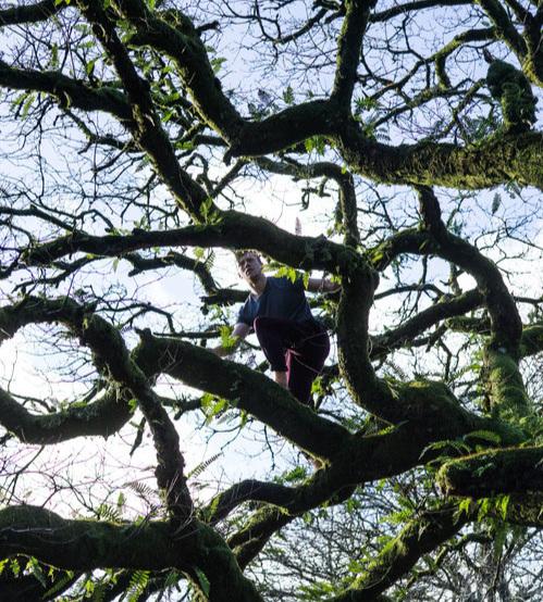 Dartmoor.Tree.Climbing