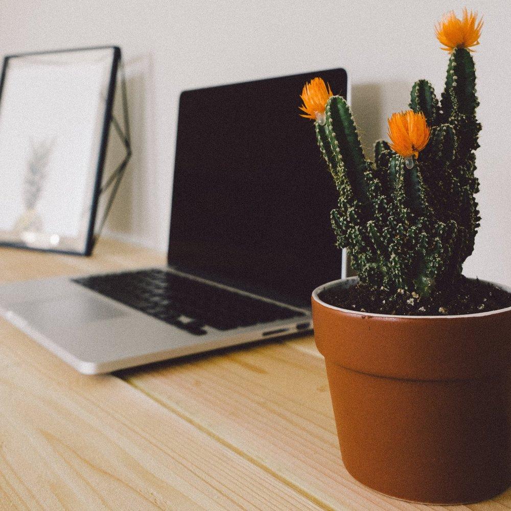 Cactus+in+Office