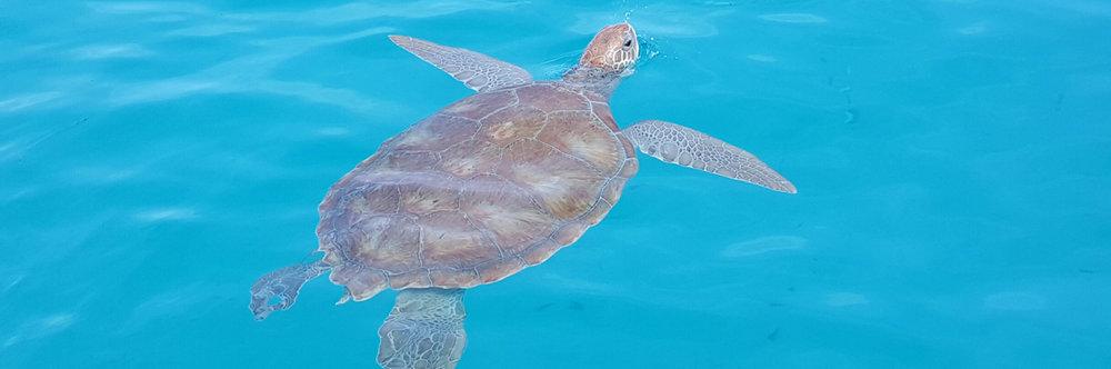 1399x464_turtle-1399x464.jpg