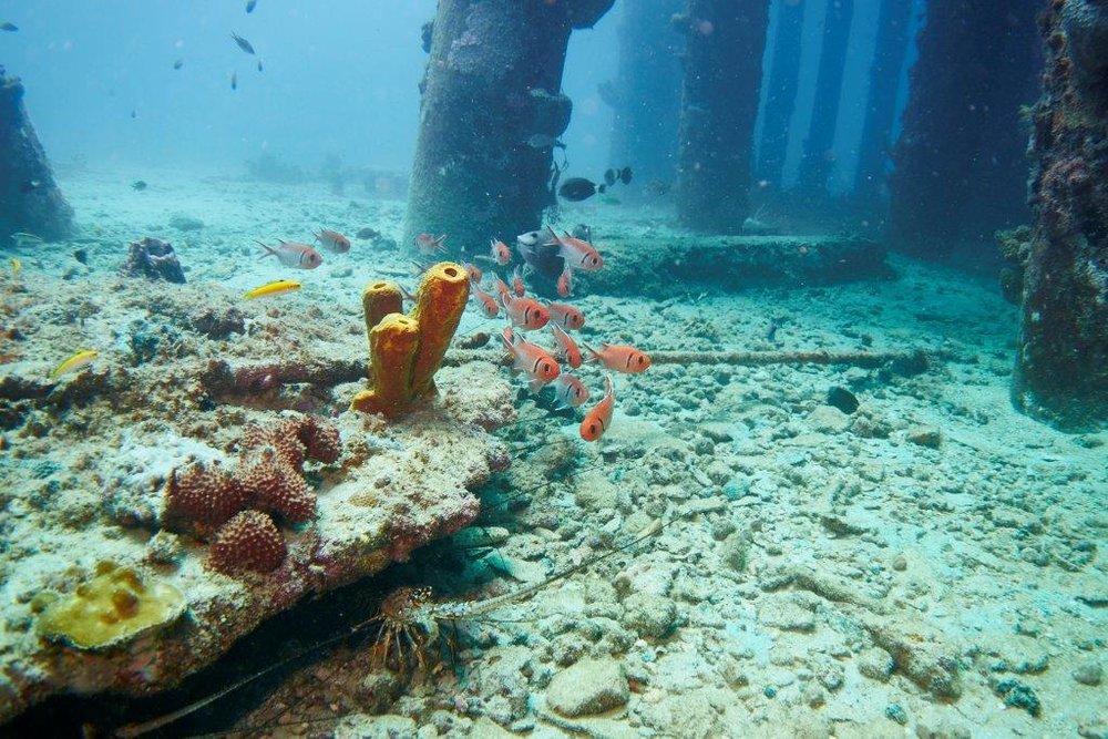 Erik - underwater photo 2.jpg