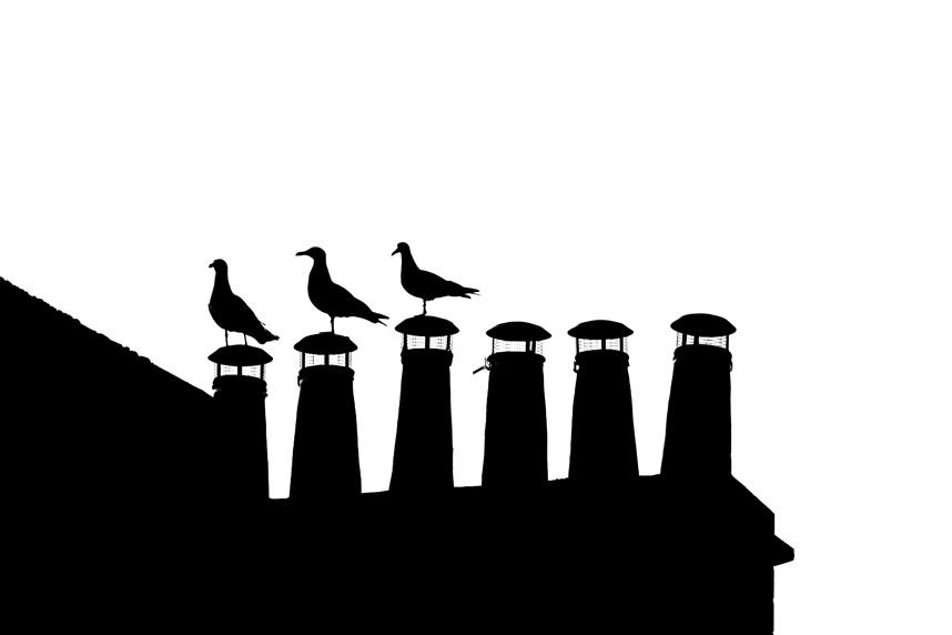 'Little Birds'