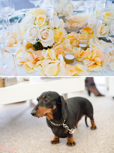 Two detail shots of yellow-themed floral table centrepiece and a dachshund