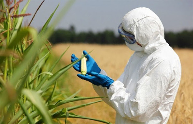 GMO-Crops.jpg