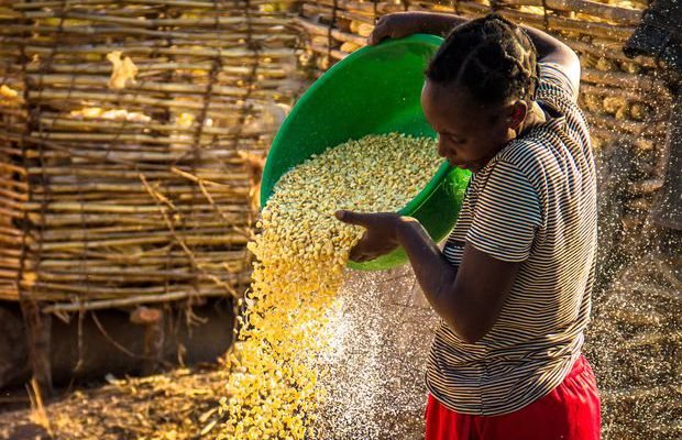 maize_farming_zambia.jpg