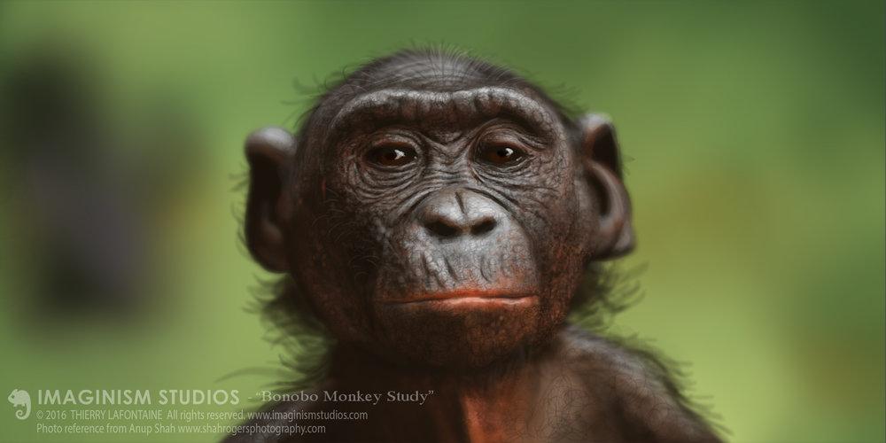 BonoboMonkey.jpg