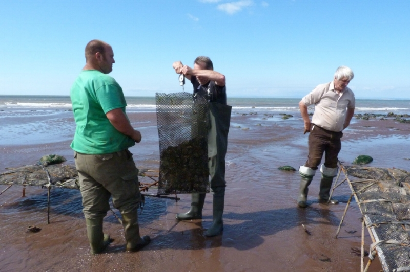porlock-bay-oysters-community-interest