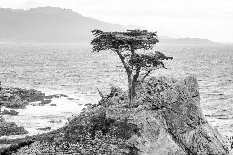 17+mile+tree.jpg