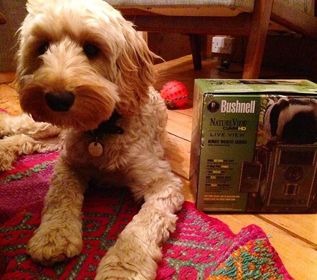 First expedition camera trap arrived! Good to see it's already attracting wildlife #ourplanisworkingperfectly . . . #bushnell #cockapoo #expedition #teammascot #cockapoosofinstagram #cockapoopuppy #edinburgh #expeditionplanning #toocute #shamelessplug #shamelessuseofpuppyininstagrampost #southamerica #manubiospherereserve #cameratrap @bushnell_official #cameratrapping #expeditionplanning #womenwhocreate #womenwhoexplore