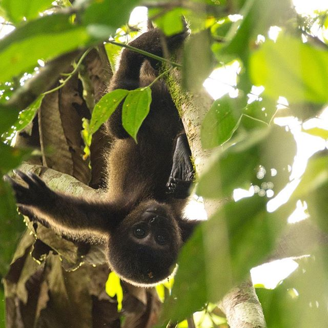 Don't mind us, we're just hanging around waiting to share some BIG NEEEEEEEWS with you!!! . . . Photo by @eilidhmmunro #watchthisspace #bignews #expedition #expeditionplanning #monkey #primate #primates #babyanimals #earthcapture #earthonlocation #peru #nature #rainforest #womenwhoexplore #womenwhocreate #wildlife #nikon #nikonphotography #wildlifephotography #nature_wizards #wildlife_perfection #natgeo #natgeoyourshot